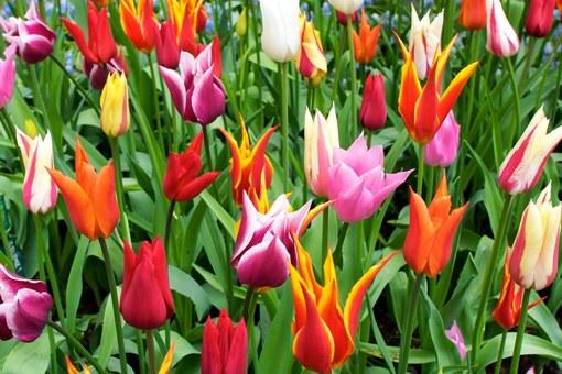 Как объяснить слепому буйство весенних красок