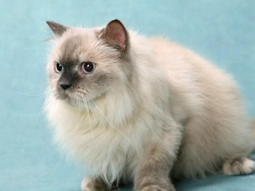 нужно начинать кормить кастрированного кота кормом для кастртрованных котов