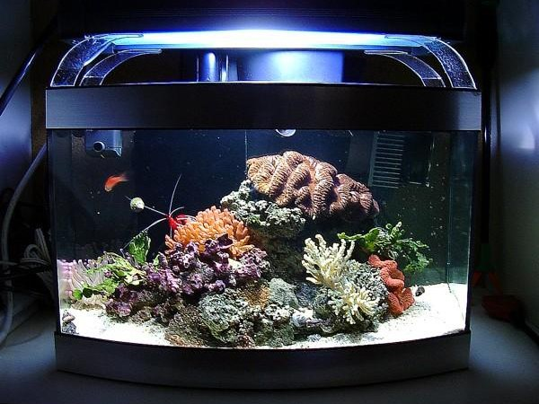 Как снизить нитраты в аквариуме