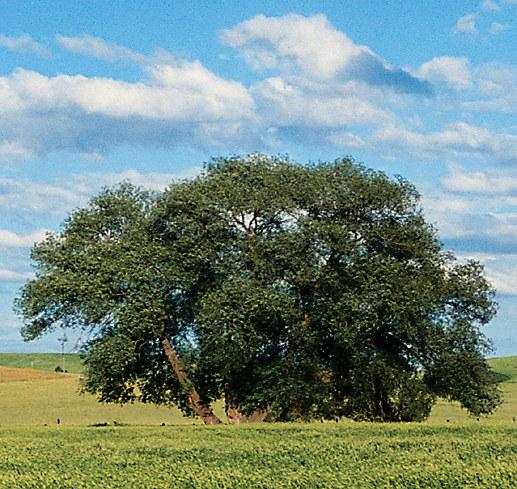 Как выделить дерево в фотошопе