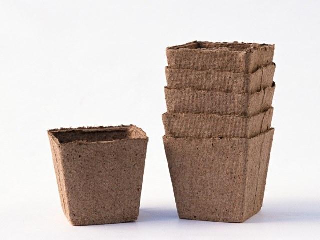 Рассаду настурции можно вырастить в торфяном горшке