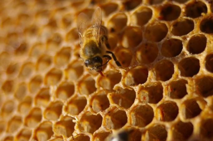 Как определить подлинность меда
