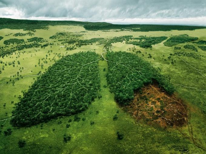 Как перевести лесные земли