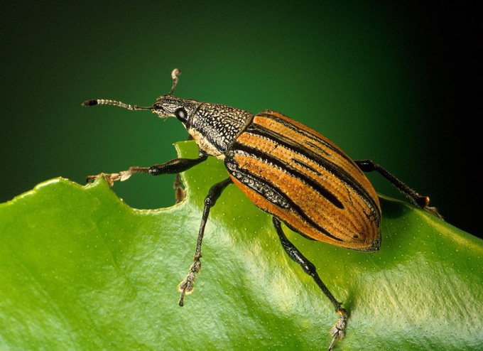 How you get rid of weevils