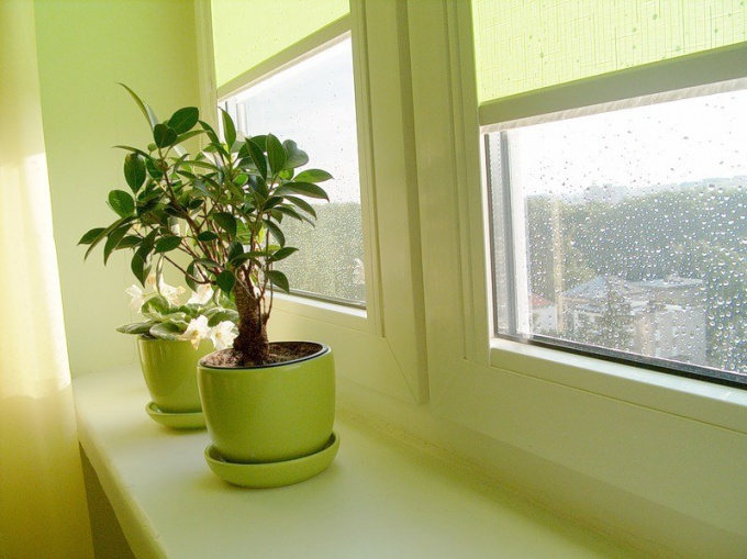 How you get rid of flies from flower