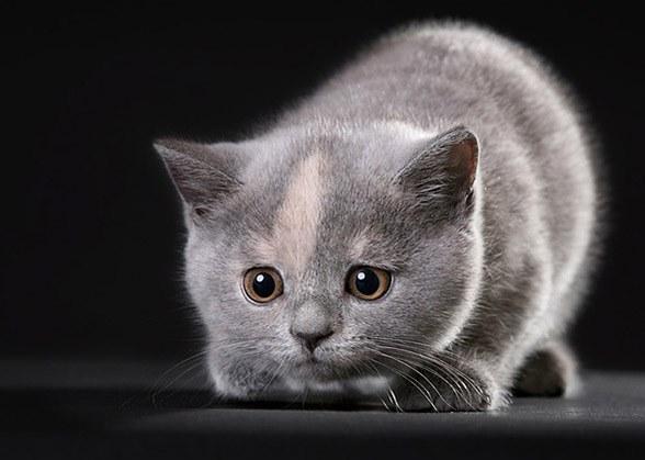 как выбрать здорового котенка