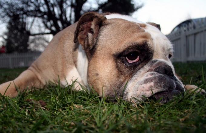 как отучить собаку есть экскременты