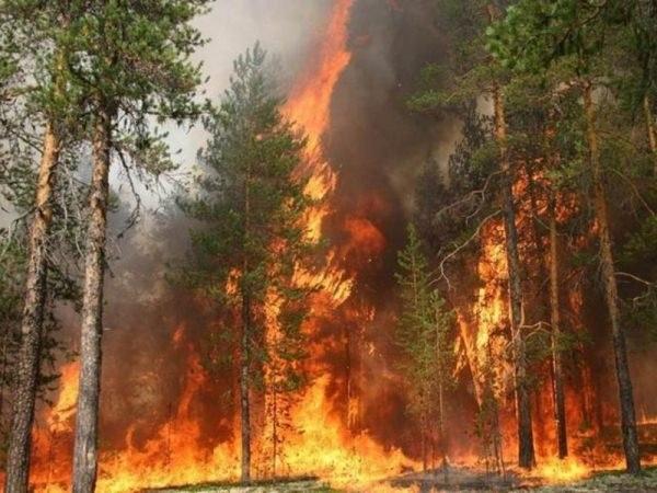 Как избежать лесного пожара