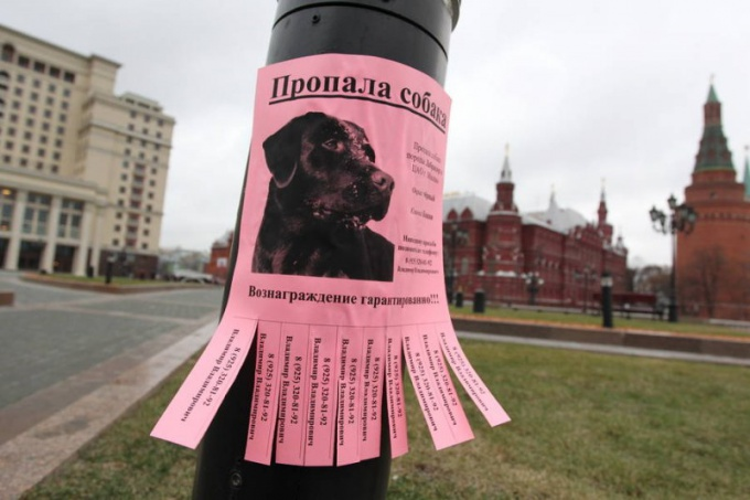 How to write a notice about the missing dog