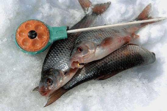 Как ловить сорожку зимой