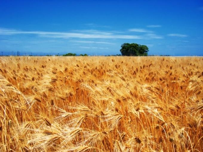 Как беречь почву