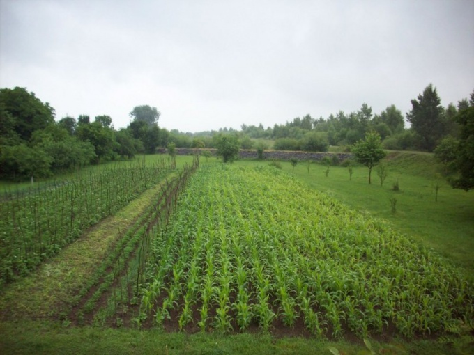 Как оформить землю из бессрочного пользования в собственность