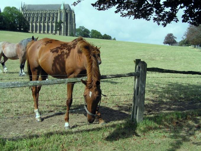 Как вести себя с лошадью