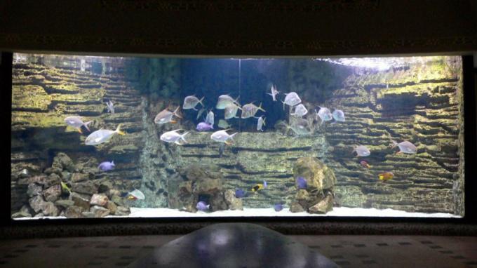 Между зонами установите большой аквариум
