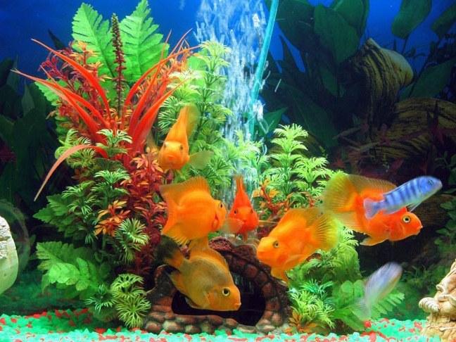 картинку на аквариуме