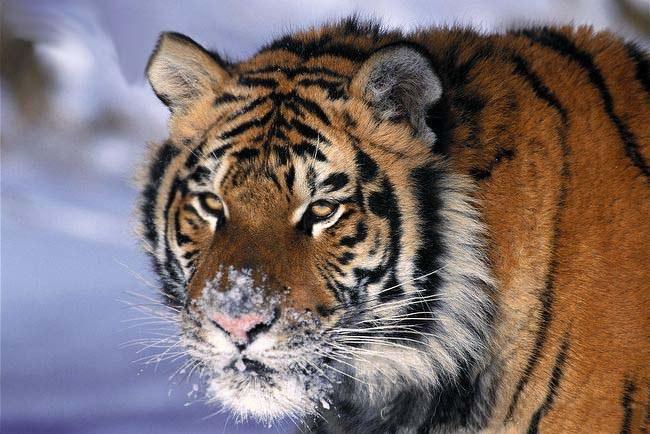 Как защитить диких животных