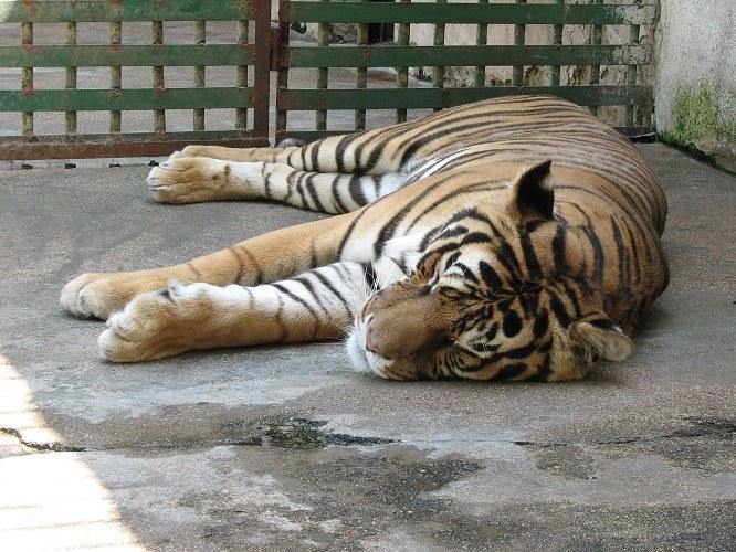 Как вести себя в зоопарке