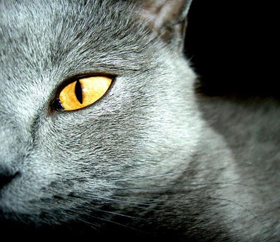 Как назвать серую кошку