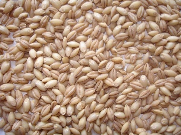 How quick cook barley