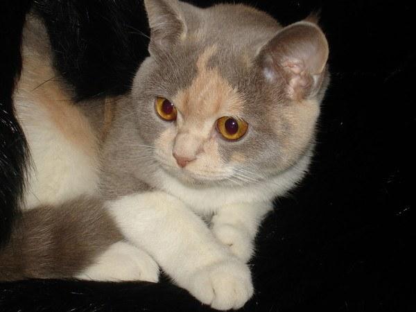 можно ли мыть двухмесячного котенка шампунью