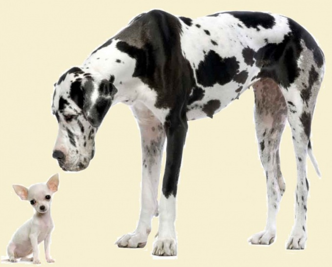 как лучше назвать собаку
