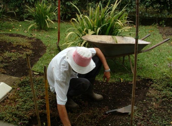 Как вывести хрен с огорода