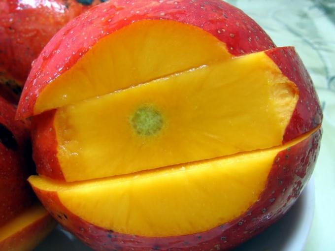 Как вырастить домашнее манго