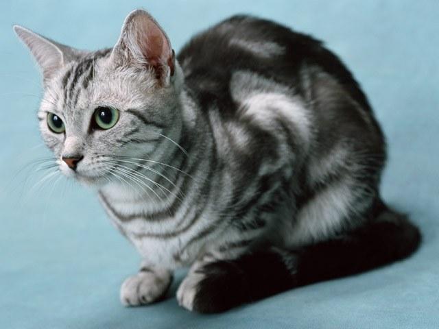 накормить котенка 1 месяц овсяной кашой