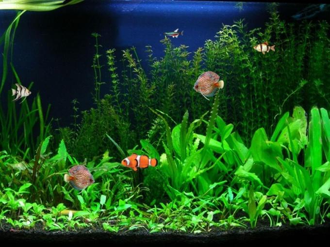 Как необходимо менять воду в аквариуме