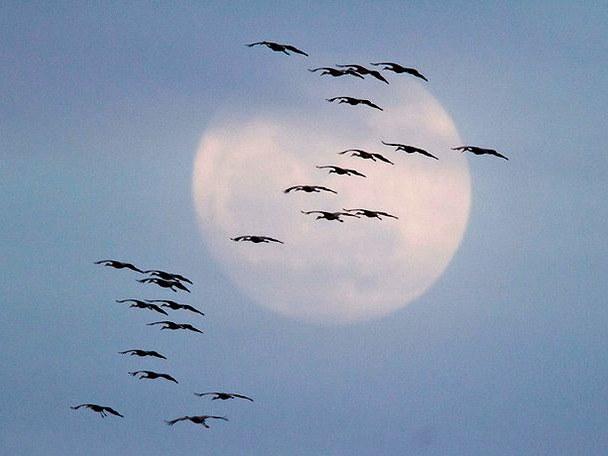 Куда улетают осенью птицы