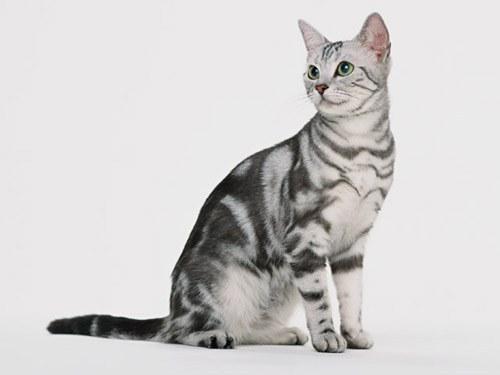 Как нарисовать сидящую кошку