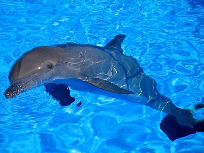 Как научиться рисовать дельфинов