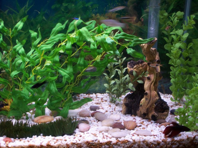 как мыть встроенный аквариум