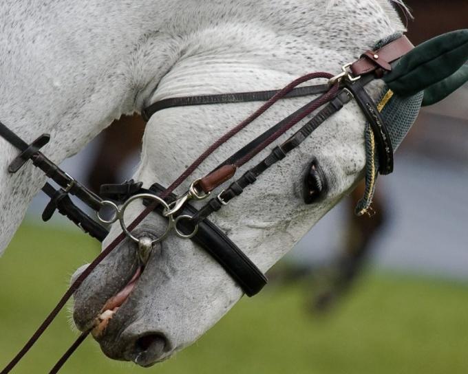 Как устроена конная упряжка