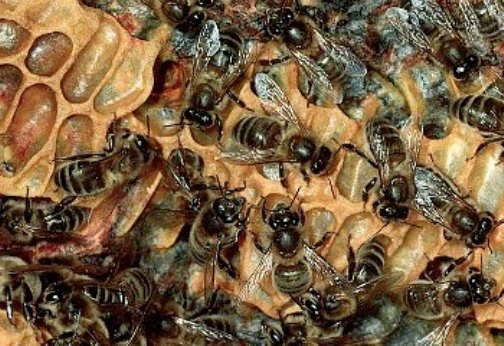 How to store Royal jelly
