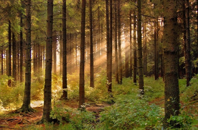 Как восстановить лес