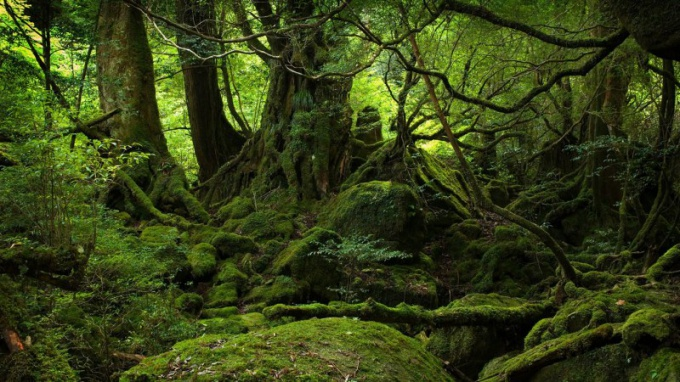 Как выйти из леса