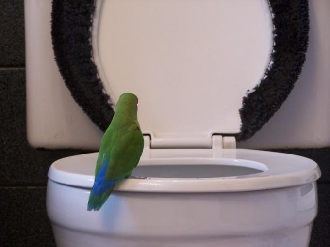 Как выбрать туалет