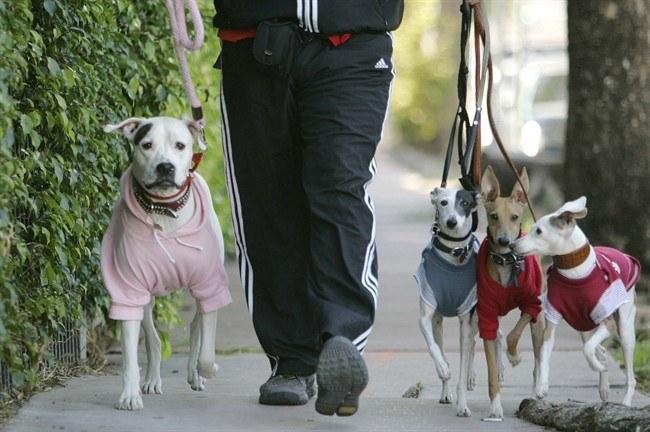 Как нужно выгуливать собак