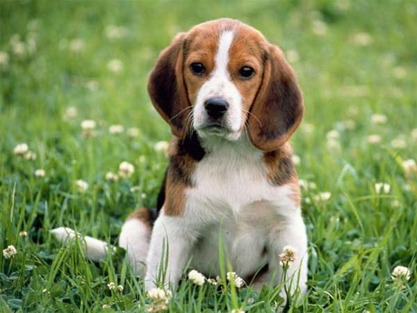 Как вывести клеща у собаки