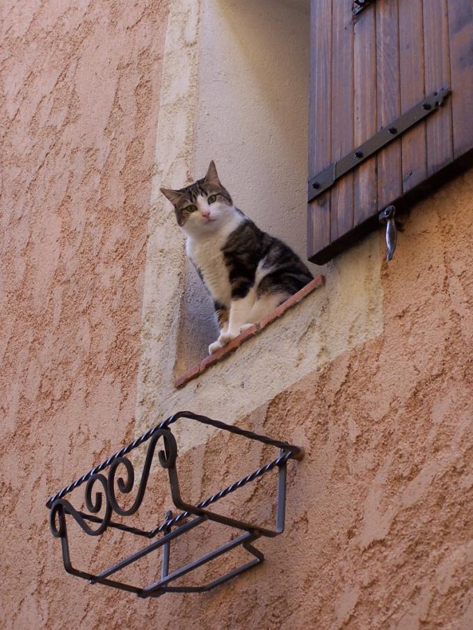 Как обращаться с чужой кошкой