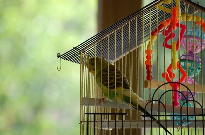 как правильно обустроить клетку попугая
