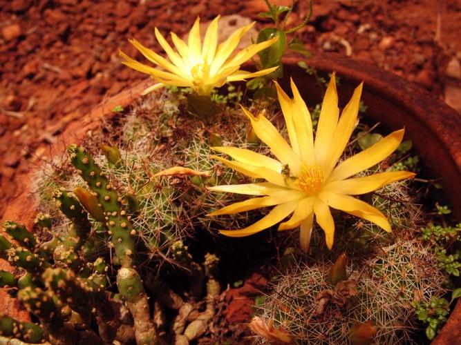 Как нужно поливать кактус