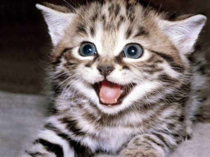 чем вывести кошачих блох в доме
