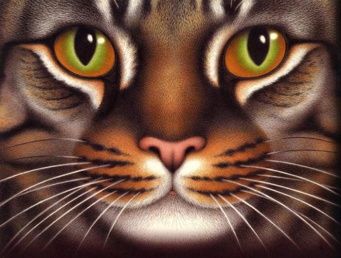 Как нарисовать животных поэтапно