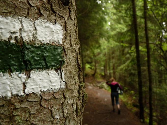 Оставляйте метки на деревьях