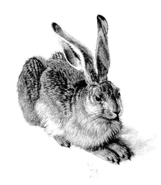 Как нарисовать зайца карандашом