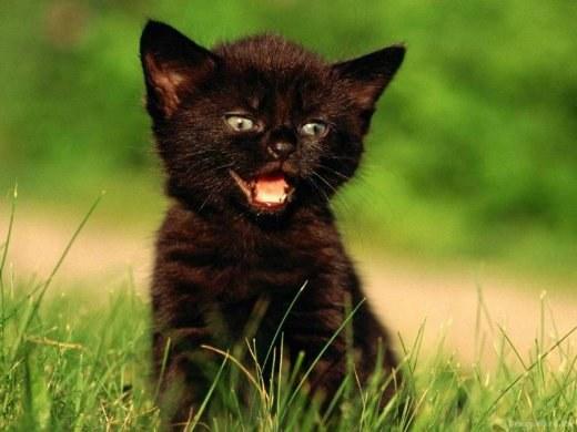 клички для чёрных котов мальчуганов