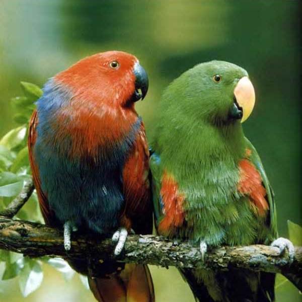 как вырастить попугая