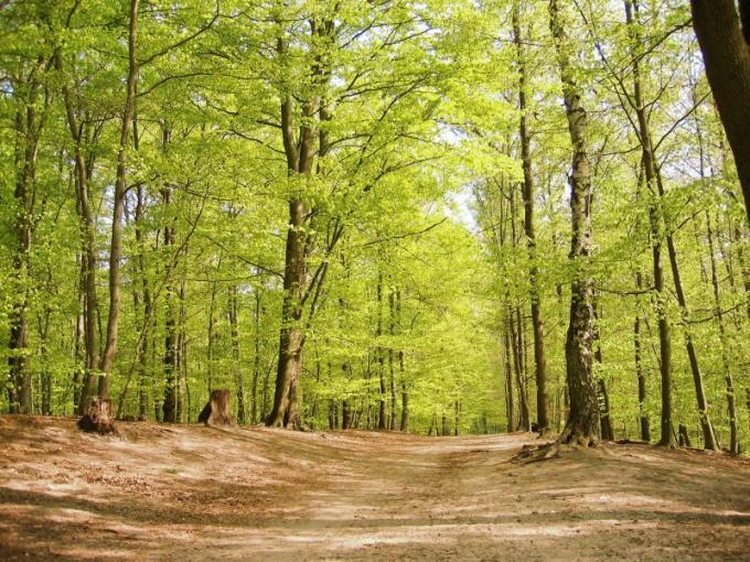 Как нужно беречь природу
